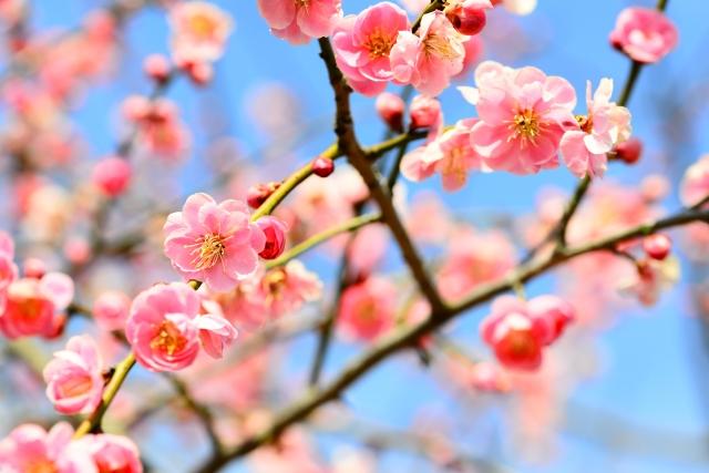 プロが教えるブラジル人を商談や研修のため日本へ呼ぶ商用ビザの取得方法